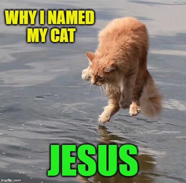 #Jesus #fridayfunny #TGIF #Churchfunny #Laugh #Love #Followchurchventure #cats #walkonwater #holy