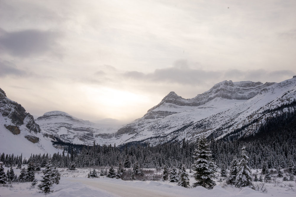 LizSong_Canada.jpg