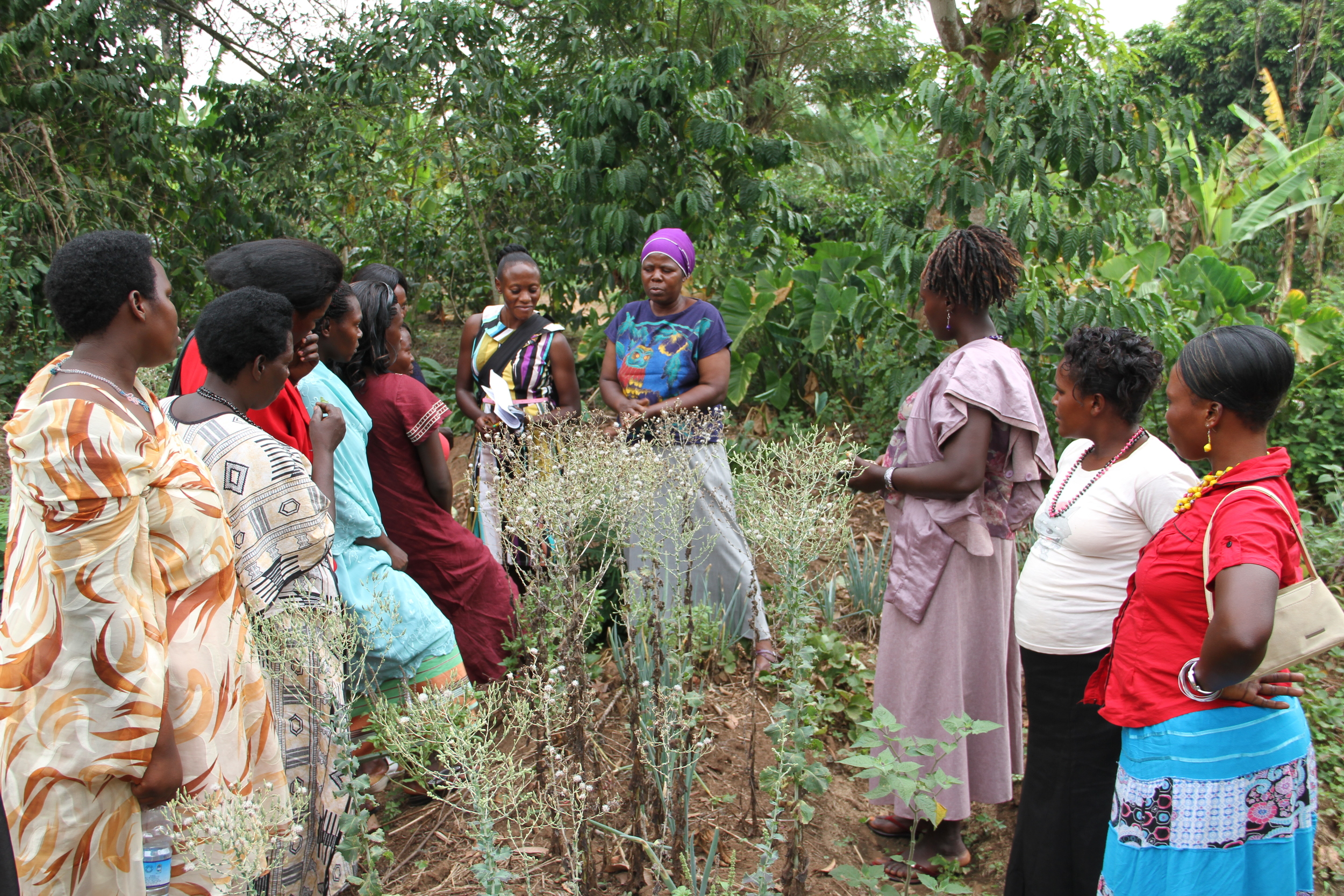 Empowered Voices takes a field visit to the Bunafo organic farms in February 2014 as part of an empowerment retreat.