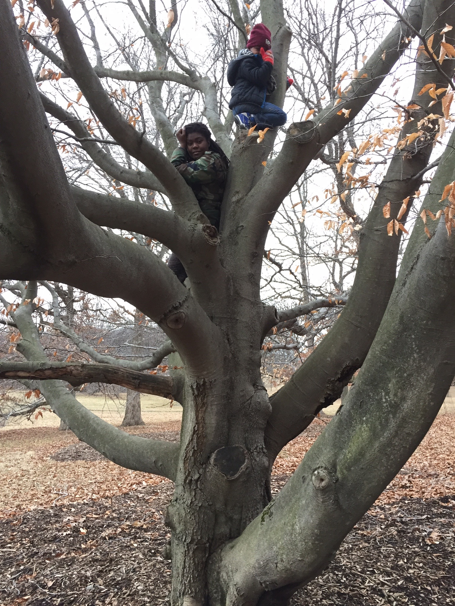 This was our first time climbing trees together. He was absolutely shocked to find out that it is actually something I did VERY often as a kid and I still got it.