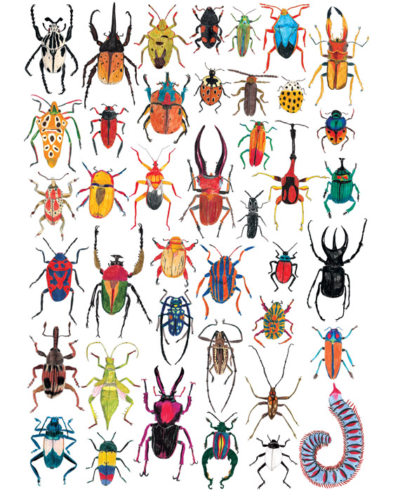 BUGS by James Barker Illustration