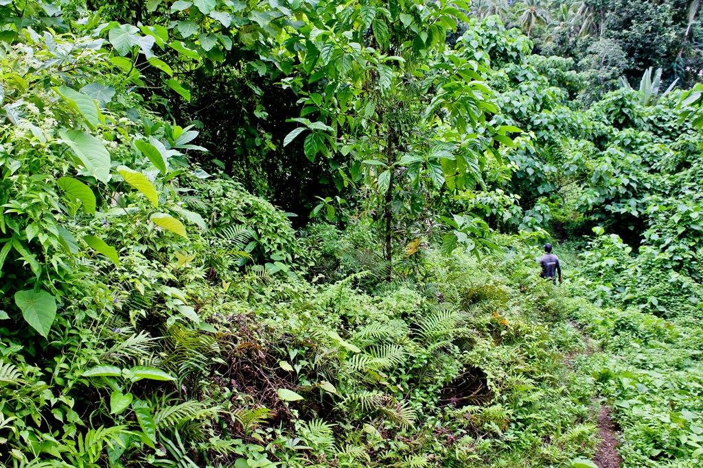 Hiking through pristine coastal forest