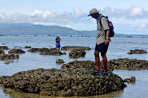 Fred and I found some pretty good-sized coral microatolls (like the one I'm standing on). This was at Mbava Island, Vella Lavella and all these corals were killed by the 2007 8.1Mw earthquake.