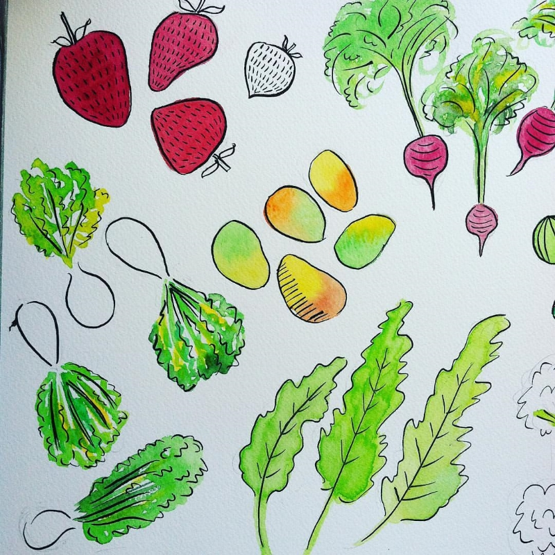 Fruits & vegetables illustrations work in progress. This project is making me hungry.
