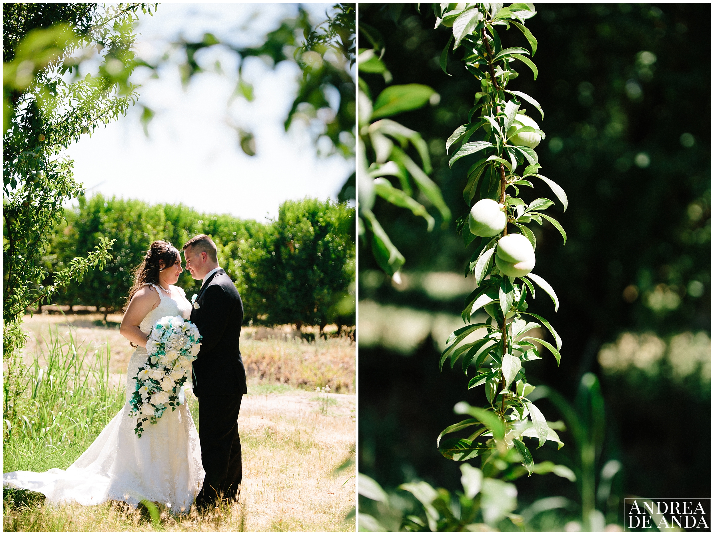 Bride and Groom creative pictures in the venue's apricot field
