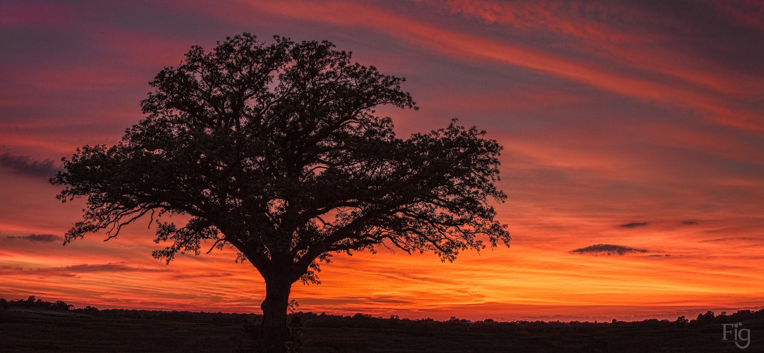 tree sunset-0432-Edit.jpg