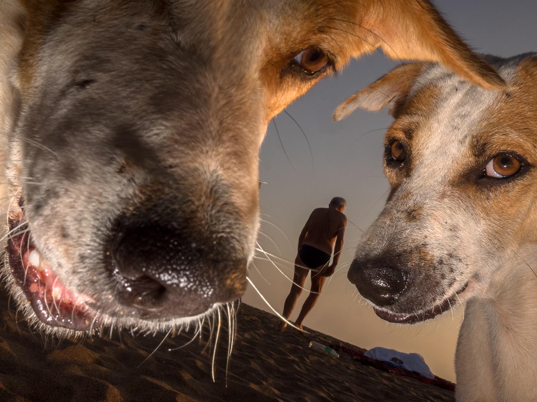 Goan to the dogs -34326.jpg