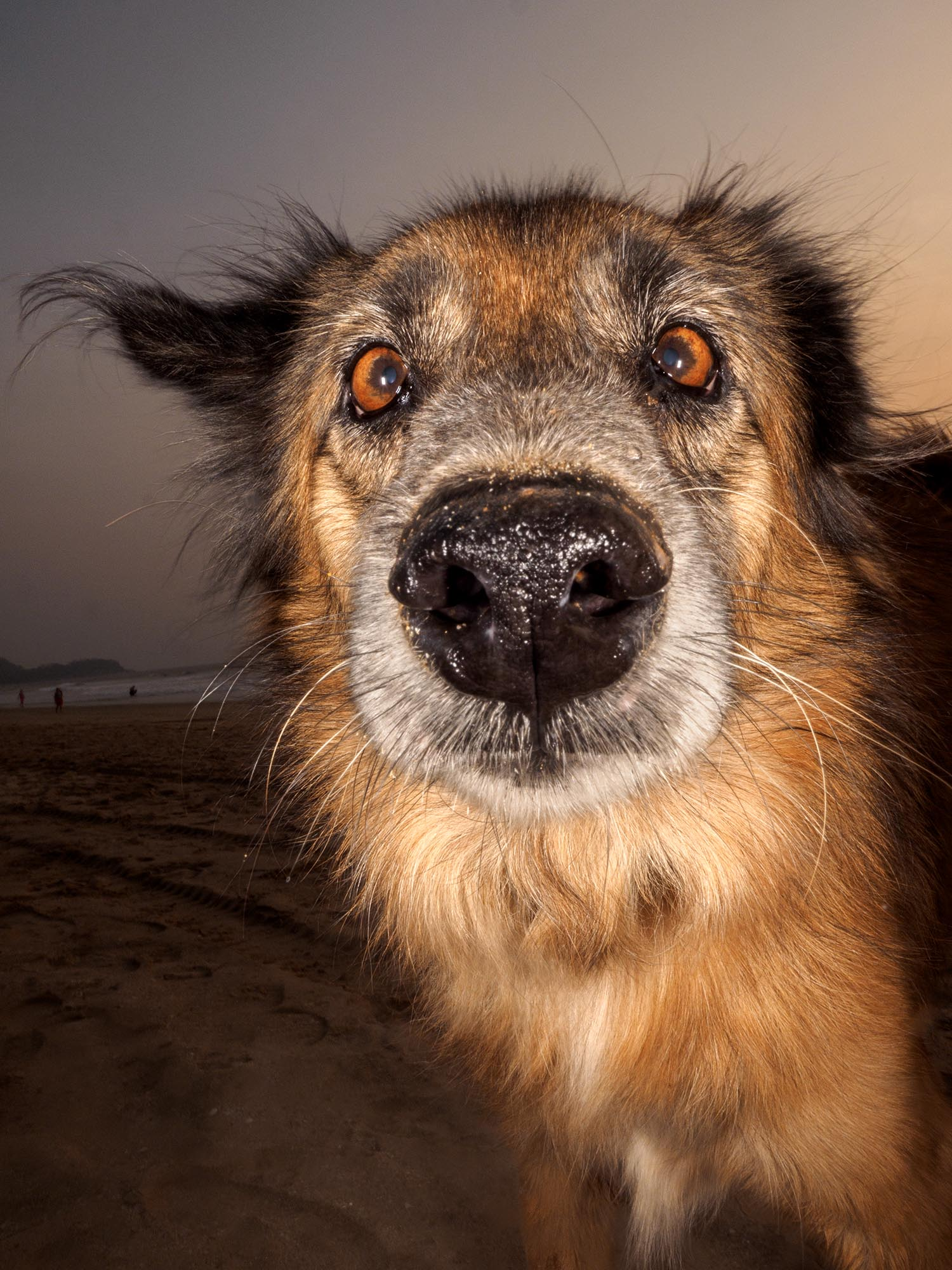 Goan to the dogs -42643.jpg