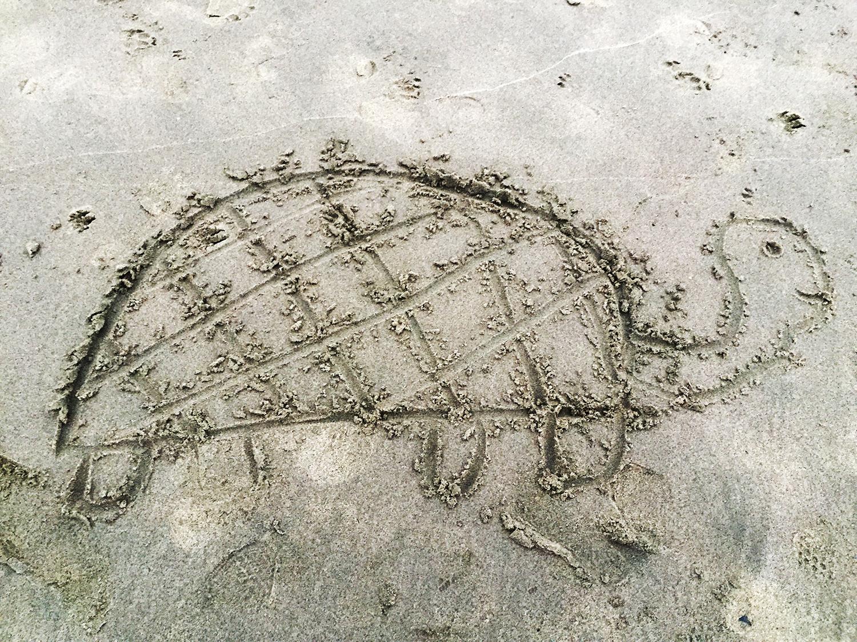 Found on Ocean Beach