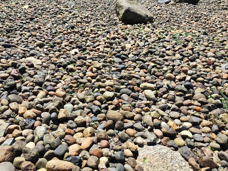 The beach here on Bainbridge Island doesn't look like our beach.