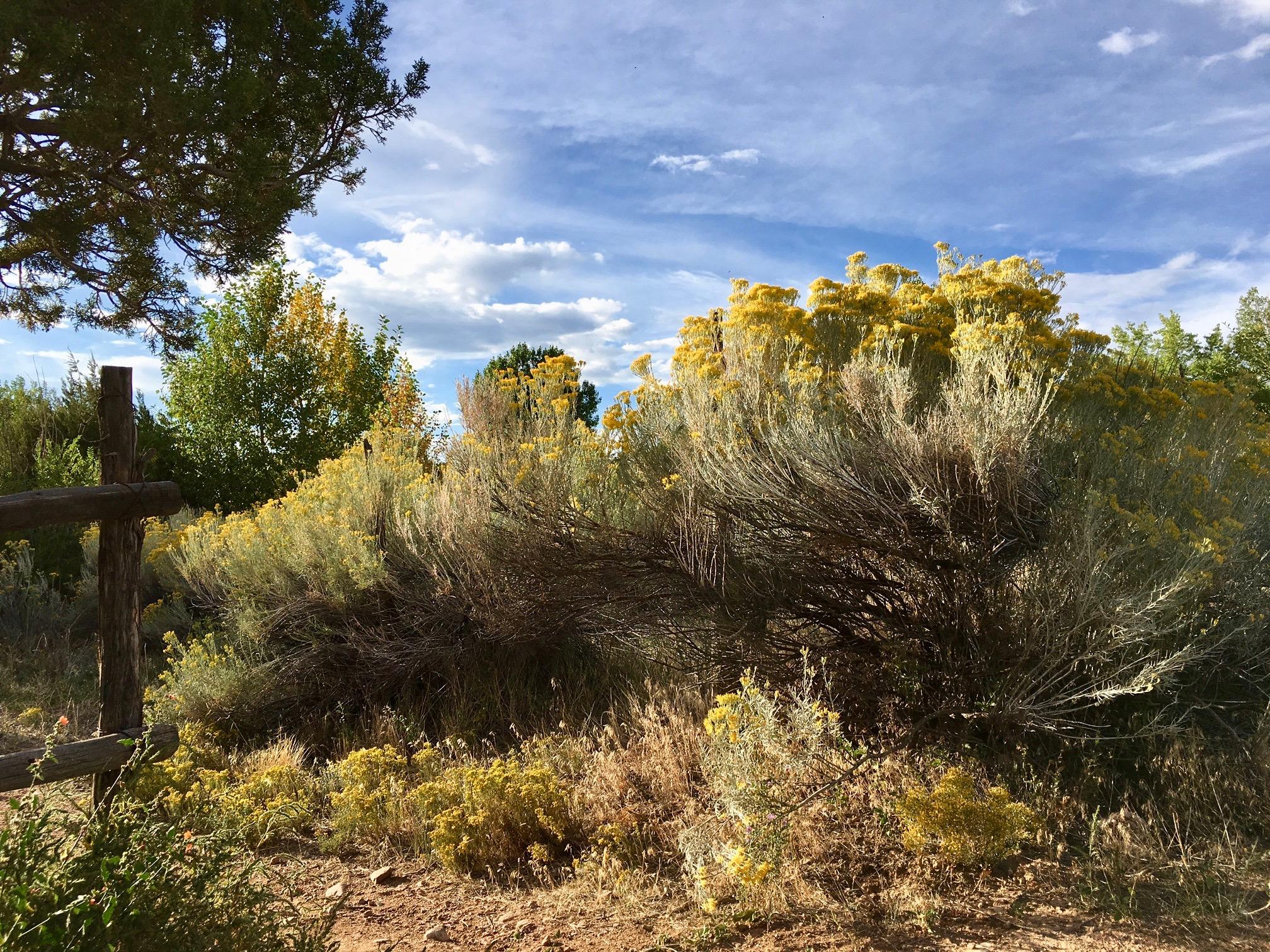 Cerro Gordo Road in Santa Fe6:01 pm     photo Larry Taylor