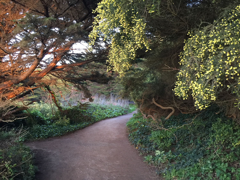 The Coastal Trail  7:28 pm