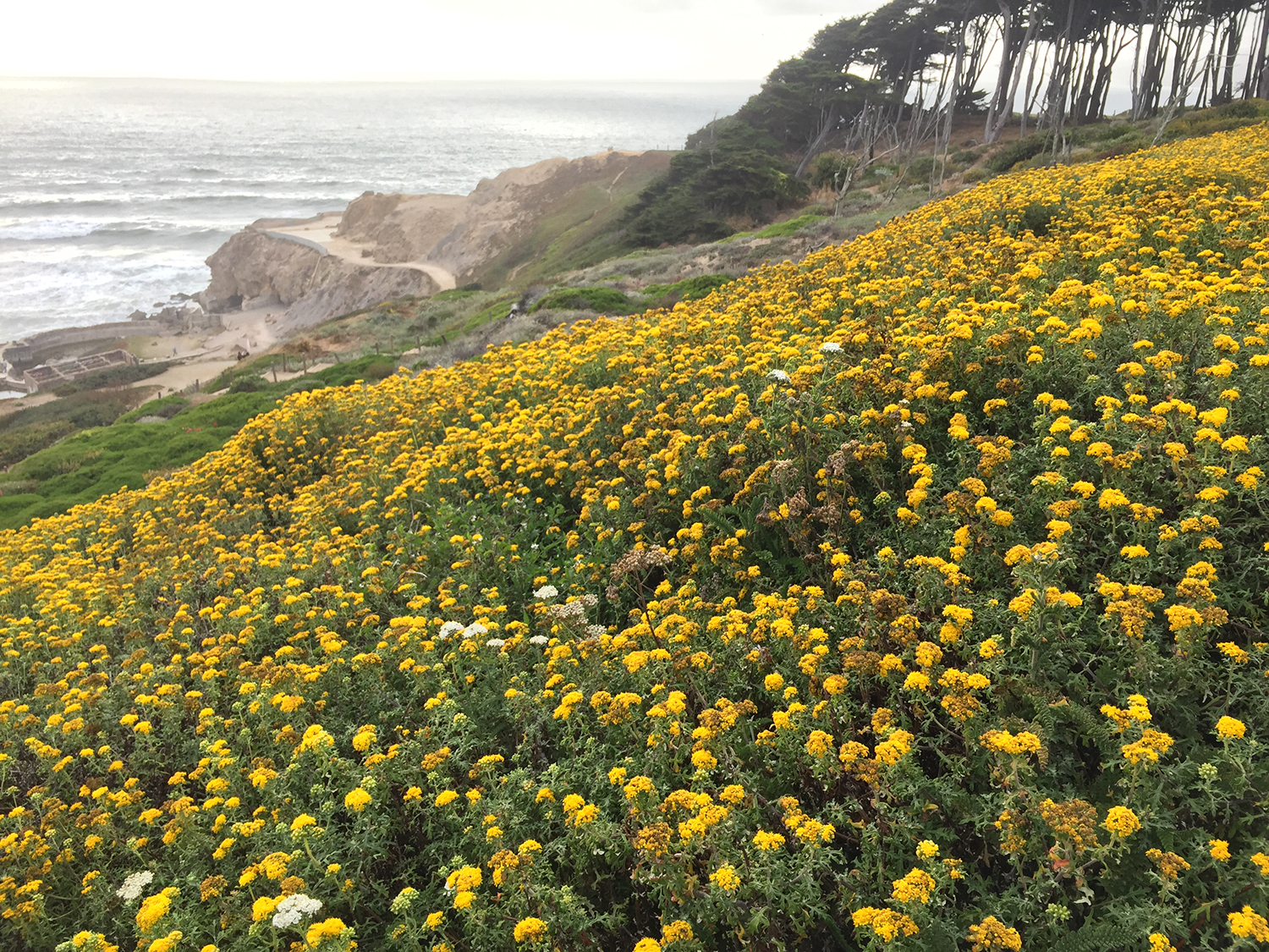 Above the Sutro Baths  7:01 pm