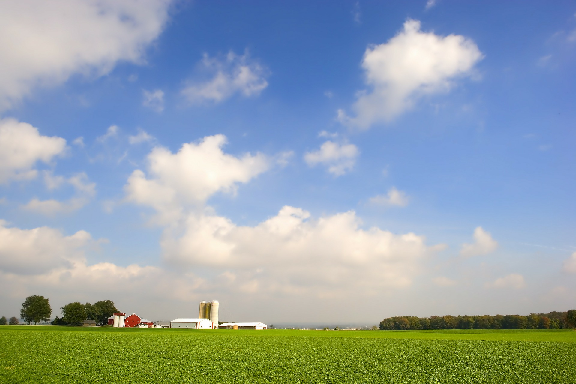 a renewable resource - Farmers can produce soy crops repeatedly, ensuring that soy wax can be produced for generations.