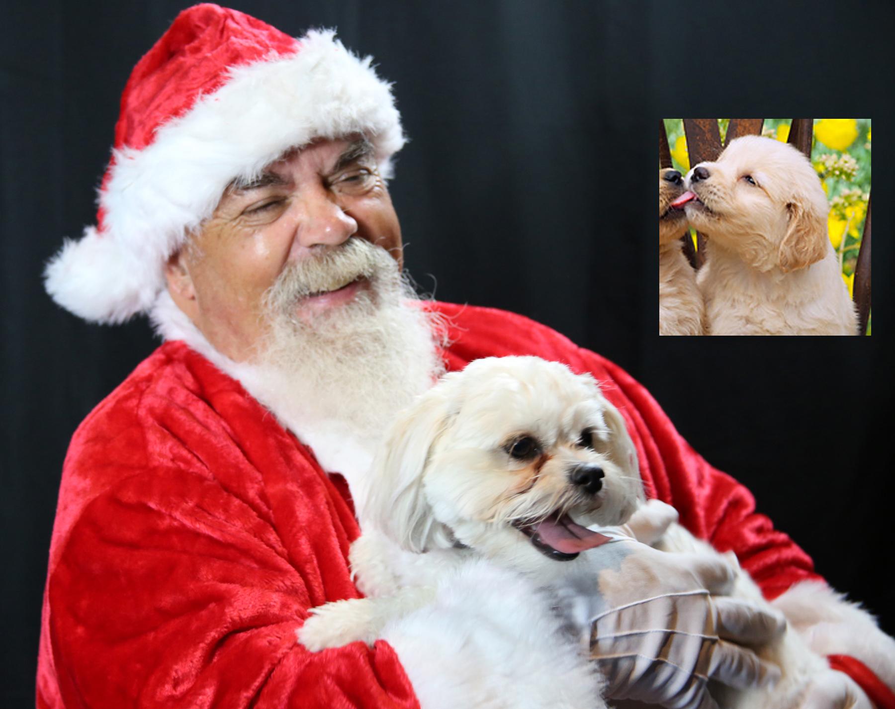 santa-puppy-ref.jpg