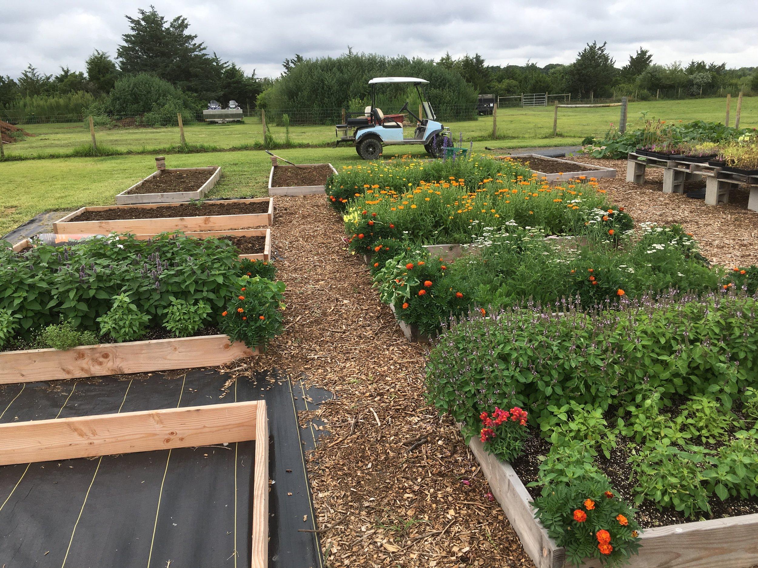 Medicinal herb garden is a work in progress...