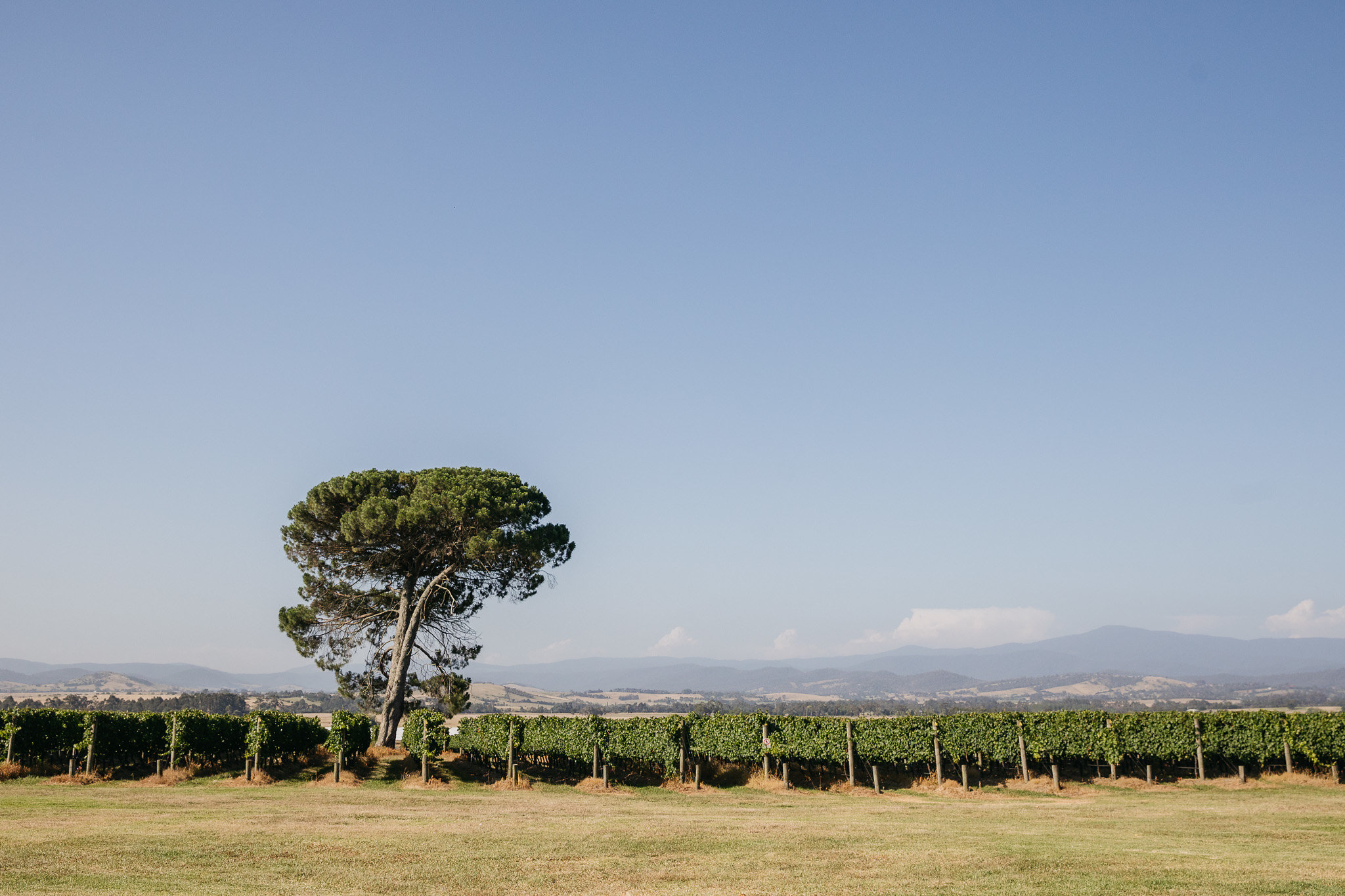 Trudi-and-Bob-Stones-of-the-Yarra-Valley-Wedding-LowRes-0452.jpg
