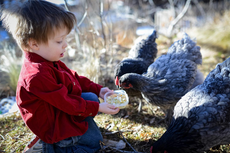 child-feeding-backyard-chickens