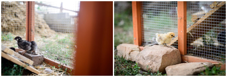 Boulder-organic-farm-environmental-photography-_0003.jpg