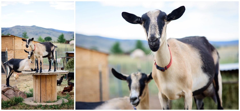 Boulder-organic-farm-environmental-photography-_0005.jpg