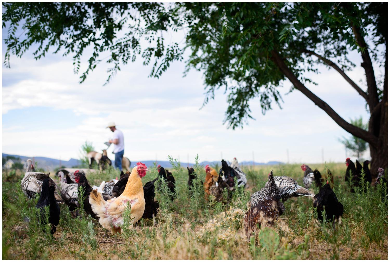 Boulder-organic-farm-environmental-photography-_0013.jpg