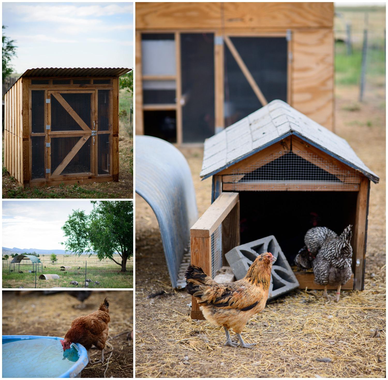 Boulder-organic-farm-environmental-photography-_0025.jpg