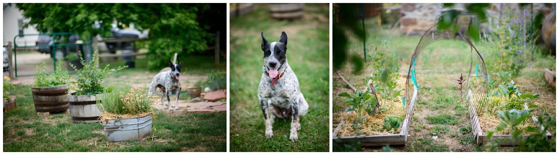 Boulder-organic-farm-environmental-photography-_0027.jpg