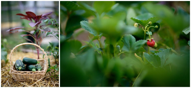 Boulder-organic-farm-environmental-photography-_0029.jpg