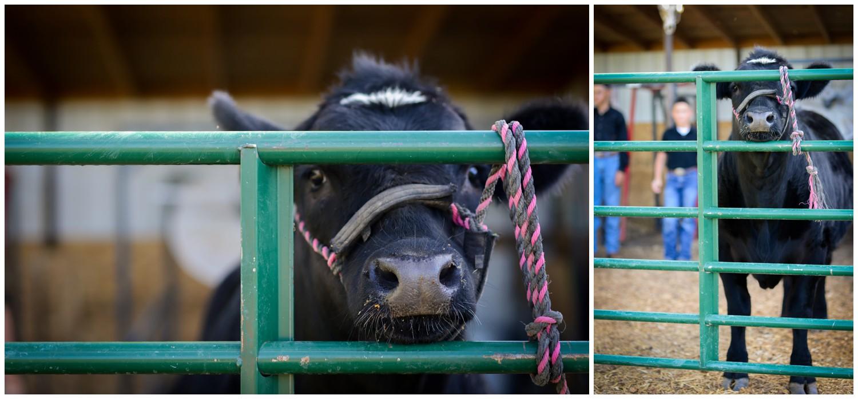 Colorado-lifestyle-farm-family-photography_0004.jpg