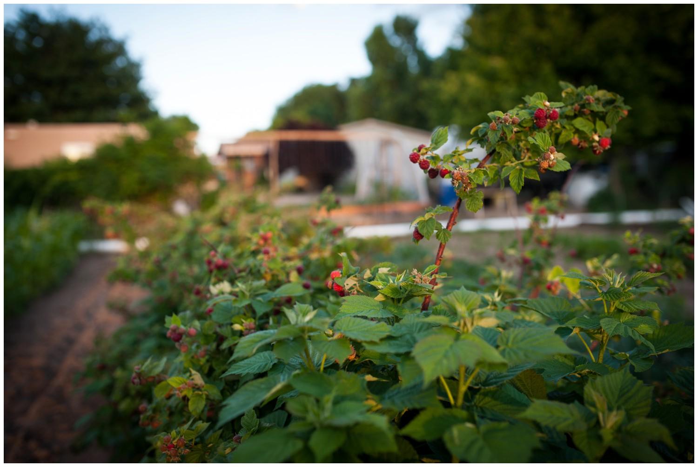 Colorado-lifestyle-farm-family-photography_0041.jpg