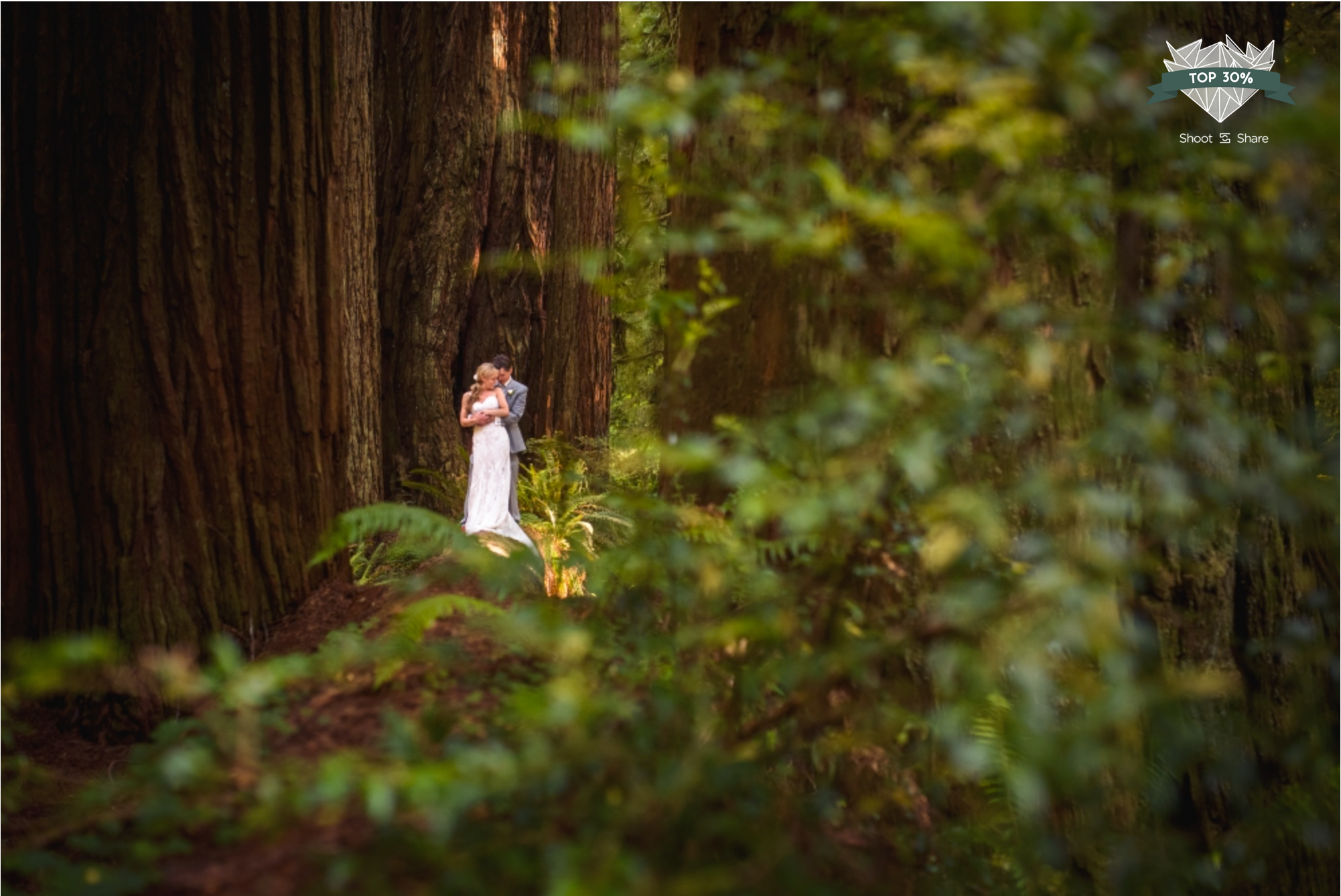 Redwood Forest Wedding - The Wedding Couple - 8,484/ 35,527