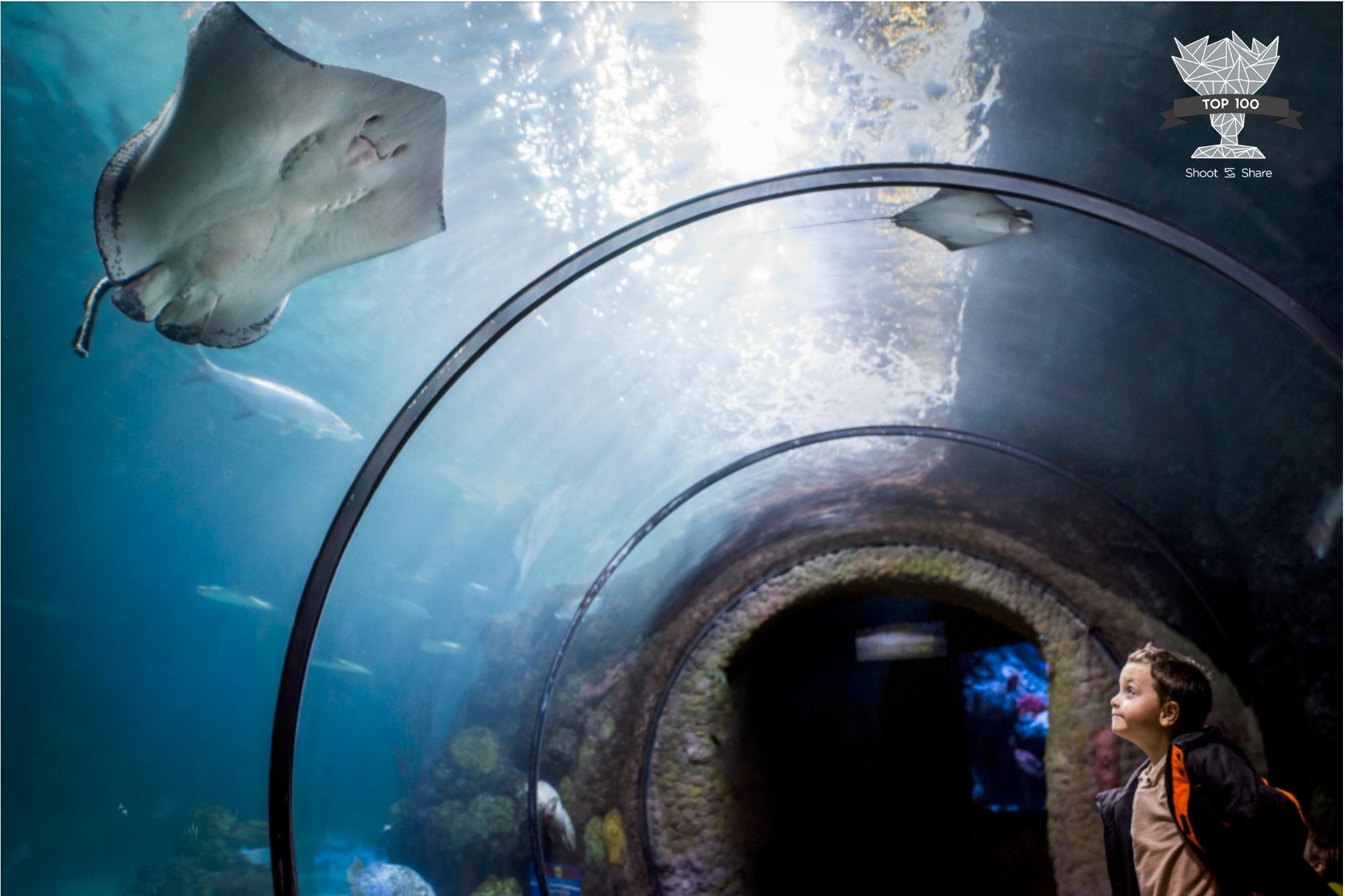 Denver Aquarium Candid Portrait - Lifestyle Category - 39th/ 10,719