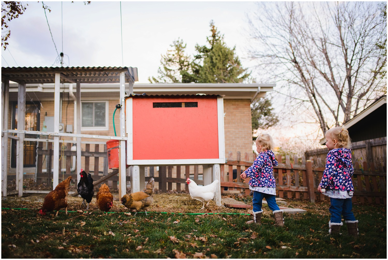 twins chase backyard chickens
