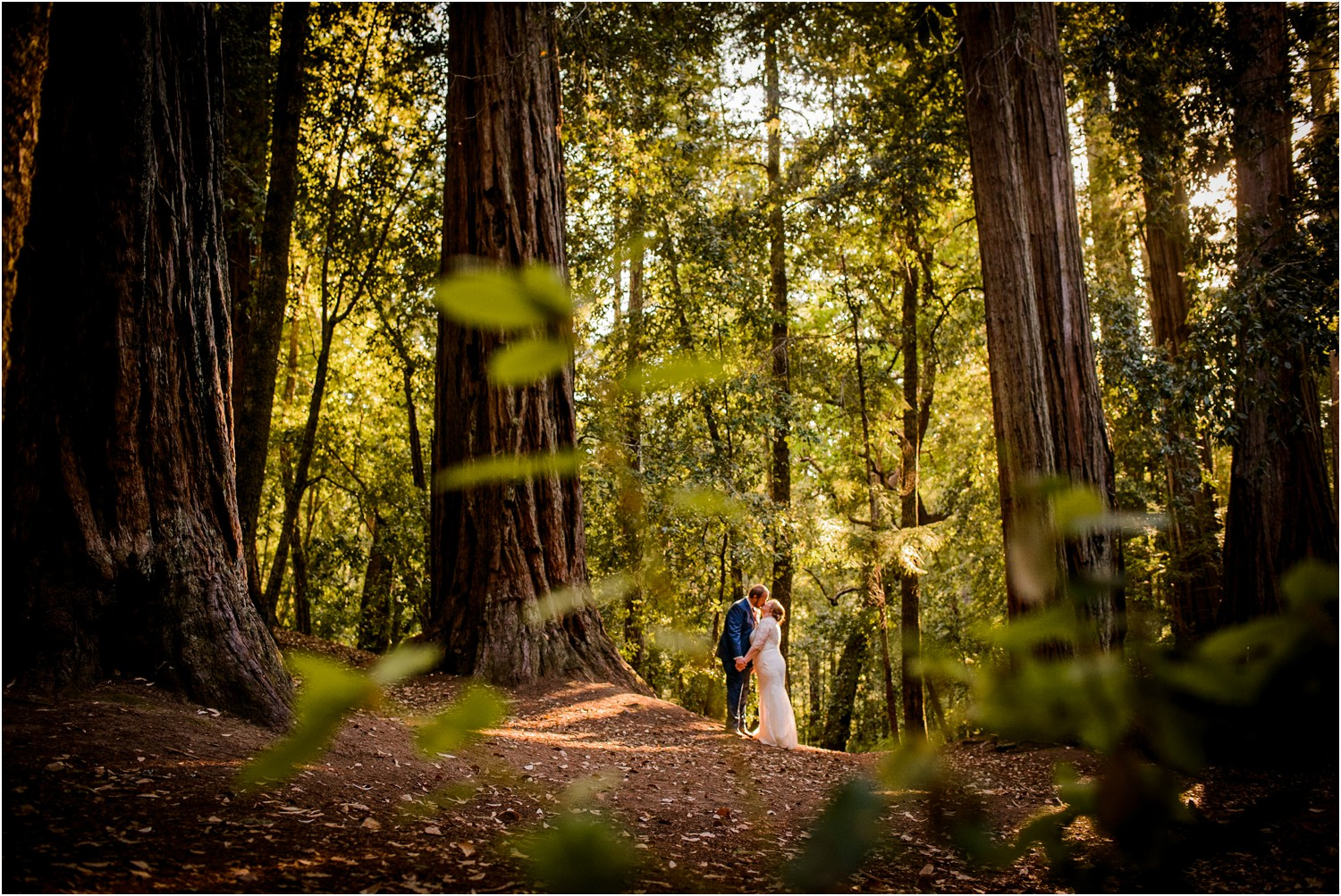 Bride and Groom kiss in sunny Redwood Forest