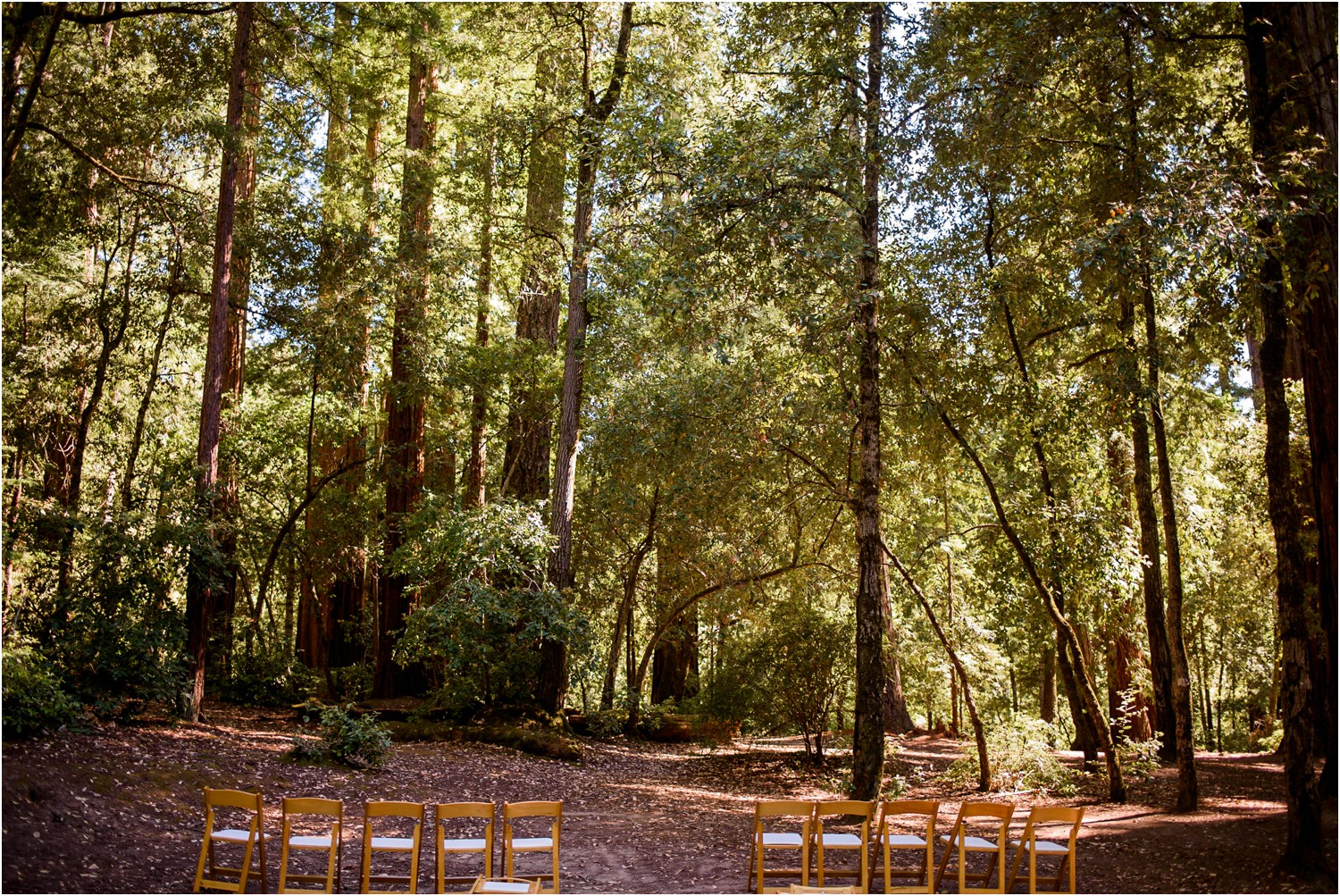 Redwood-Forest-California-Wedding-photography_0002.jpg