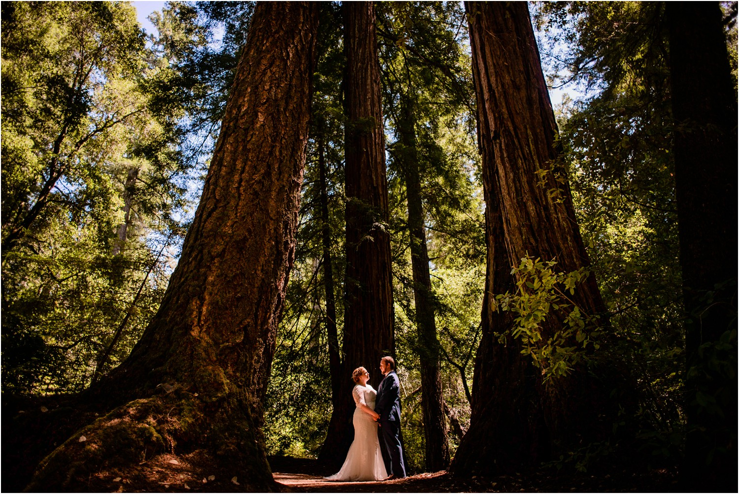 Redwood forest Wedding photo