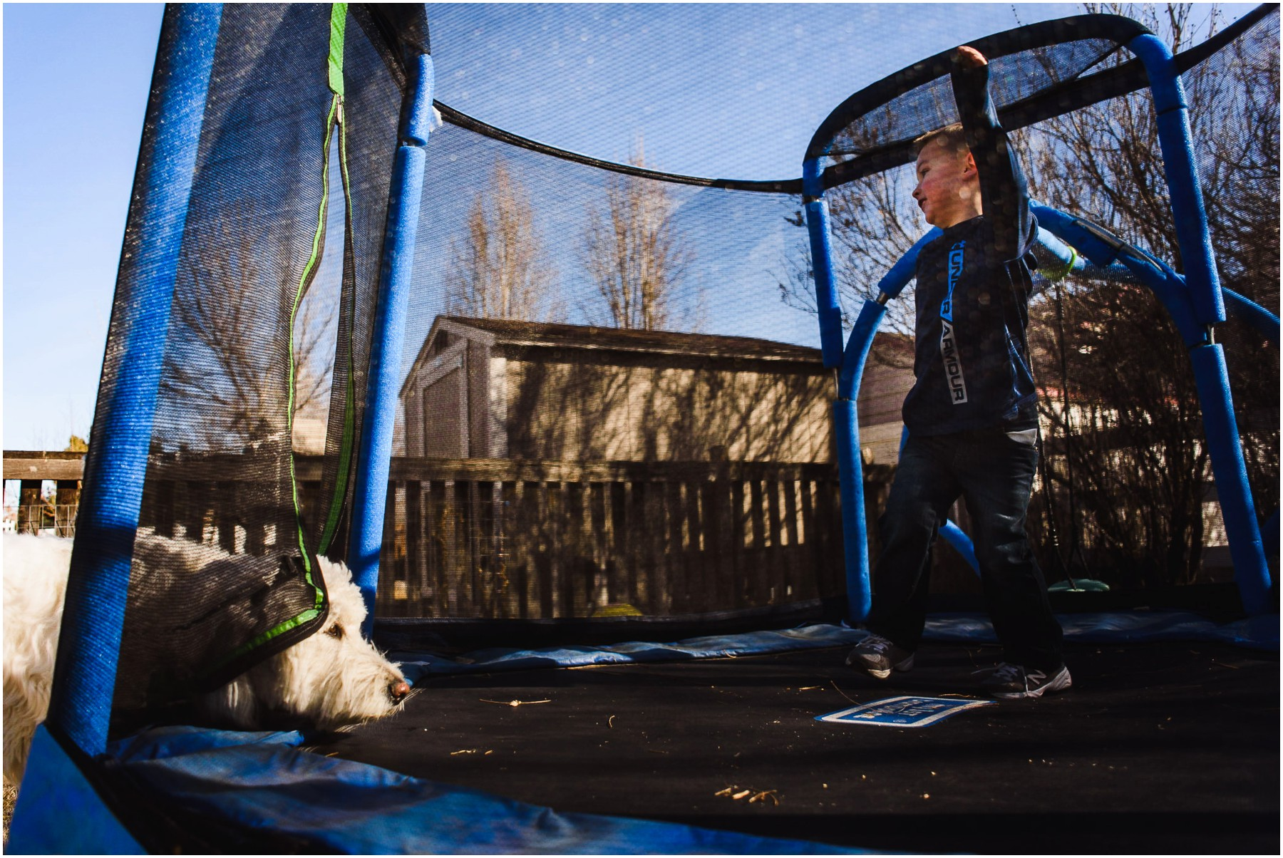 Goldendoodle and child on trampoline