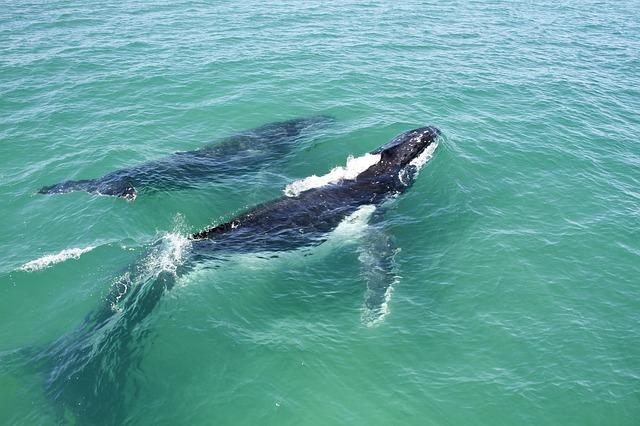 Whale Pod.jpg