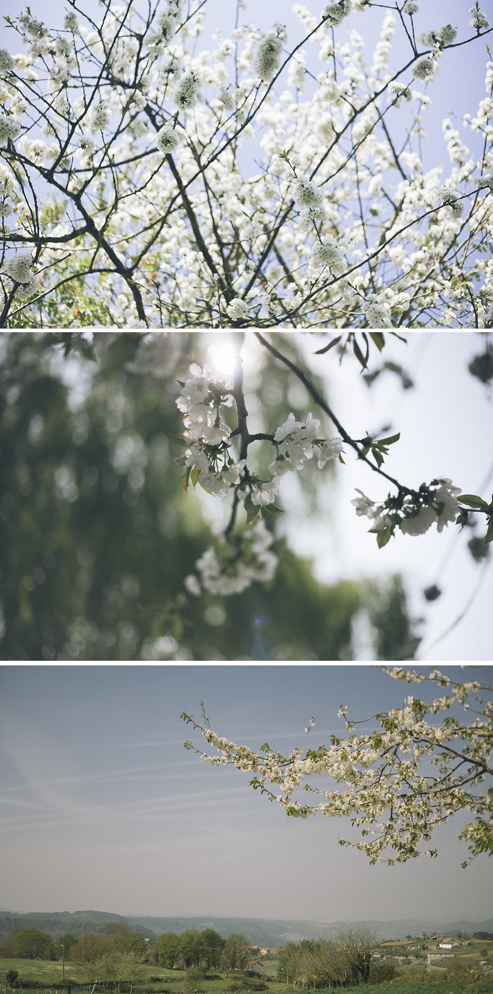 montaje-blog-4.jpg