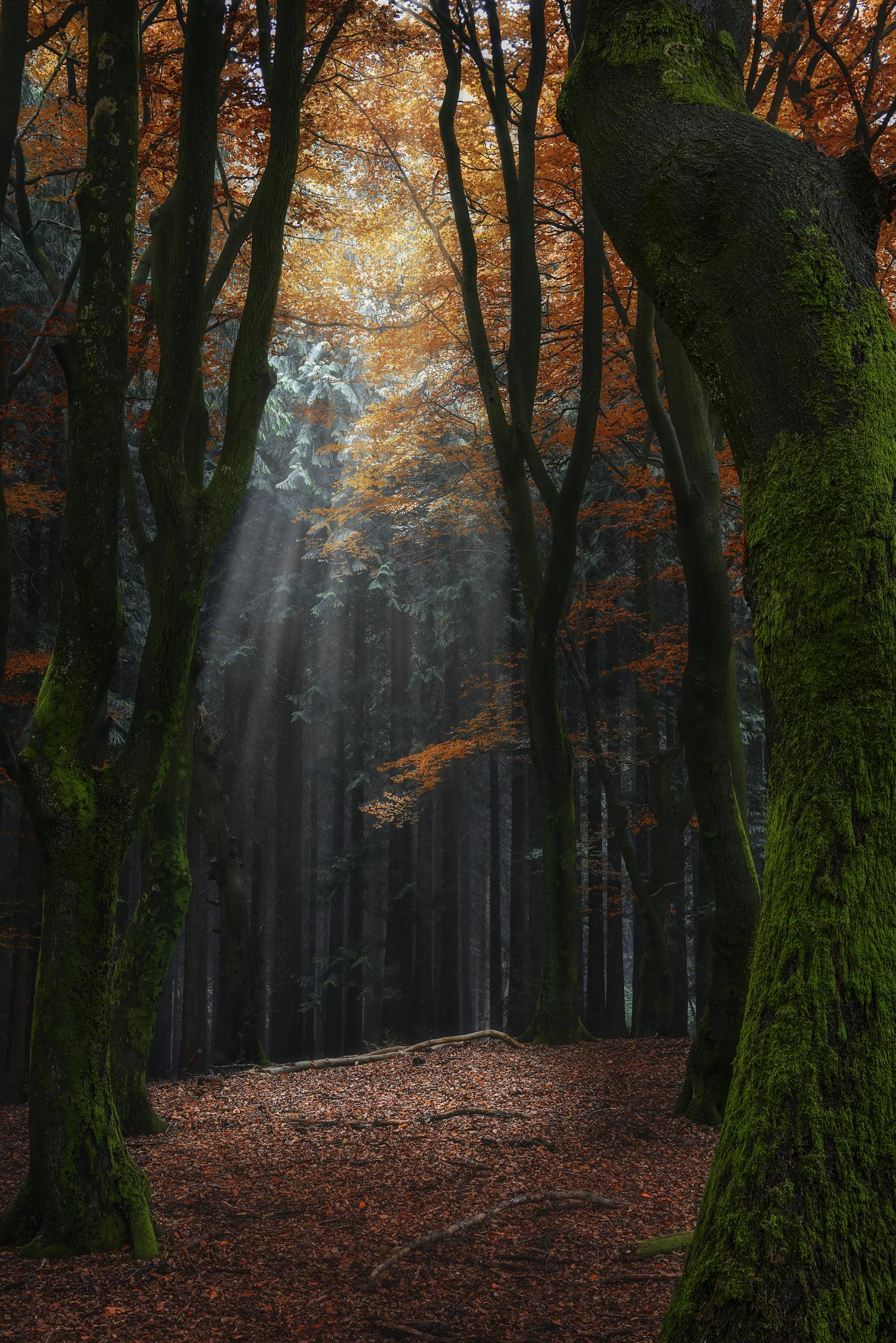 Forest Spotlight.jpg