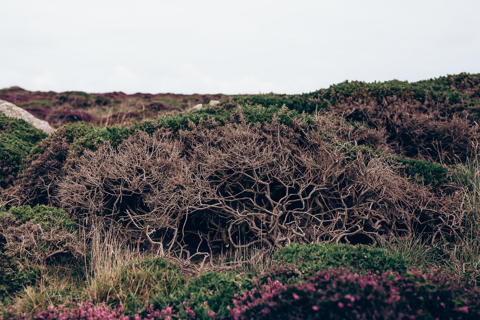 Cornwall 2015-40.JPG
