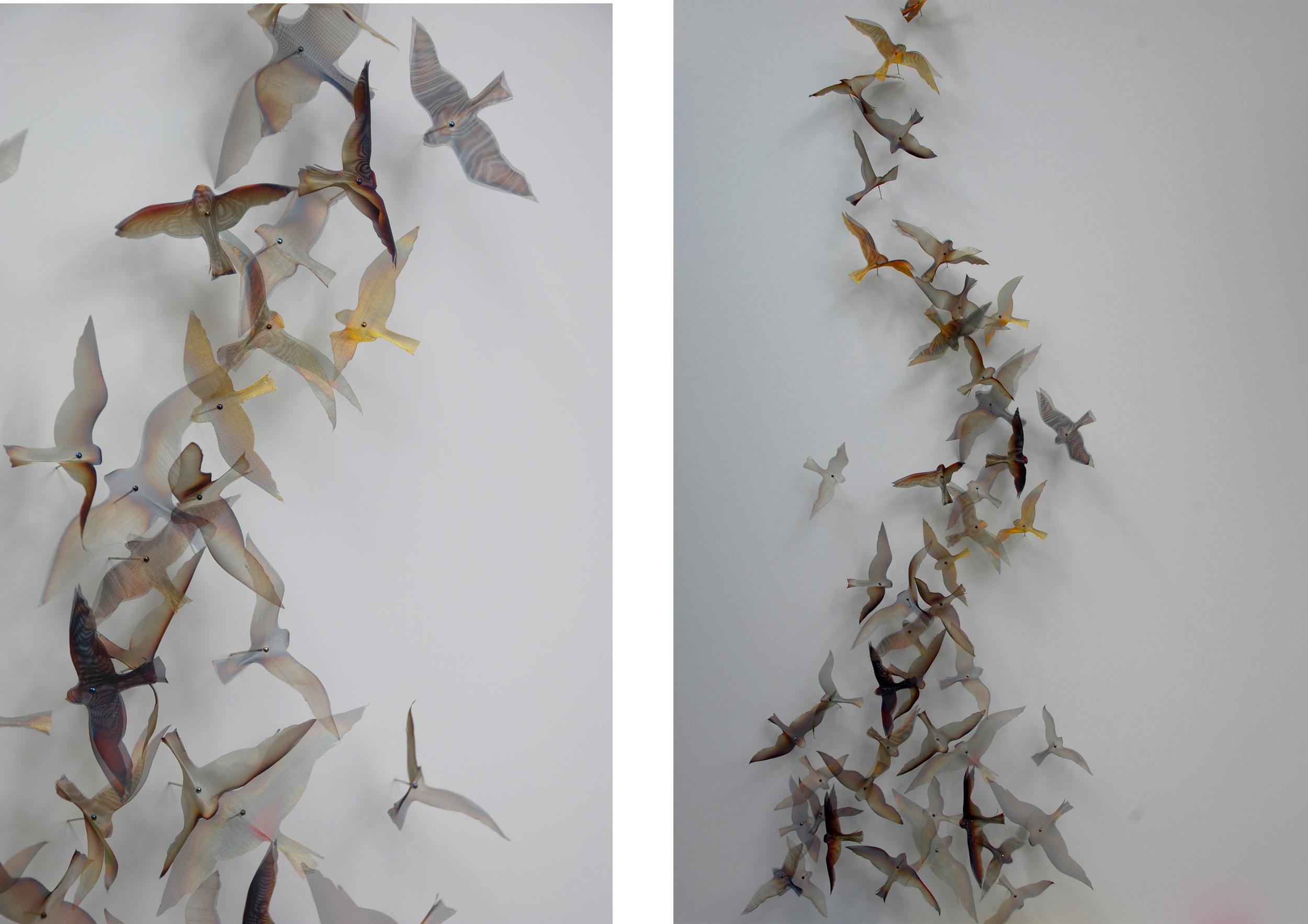 Flight Sudy Birds x2.jpg
