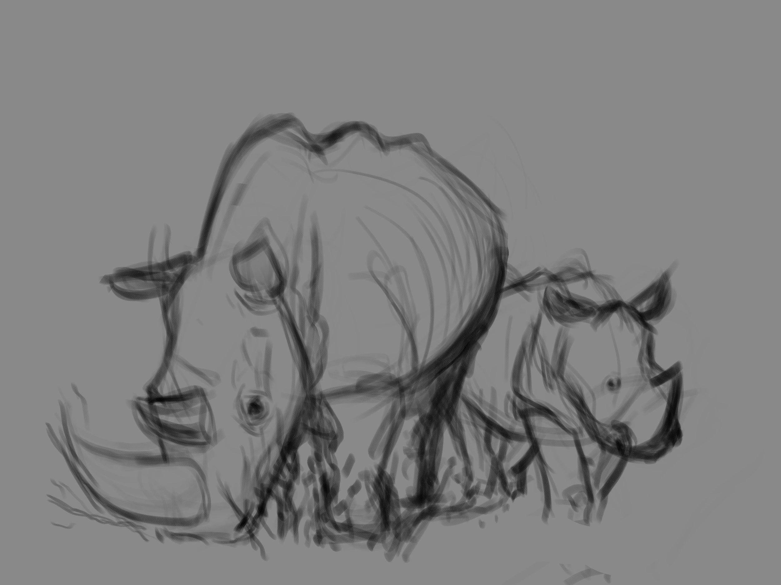 rhino life sketches 3.jpg