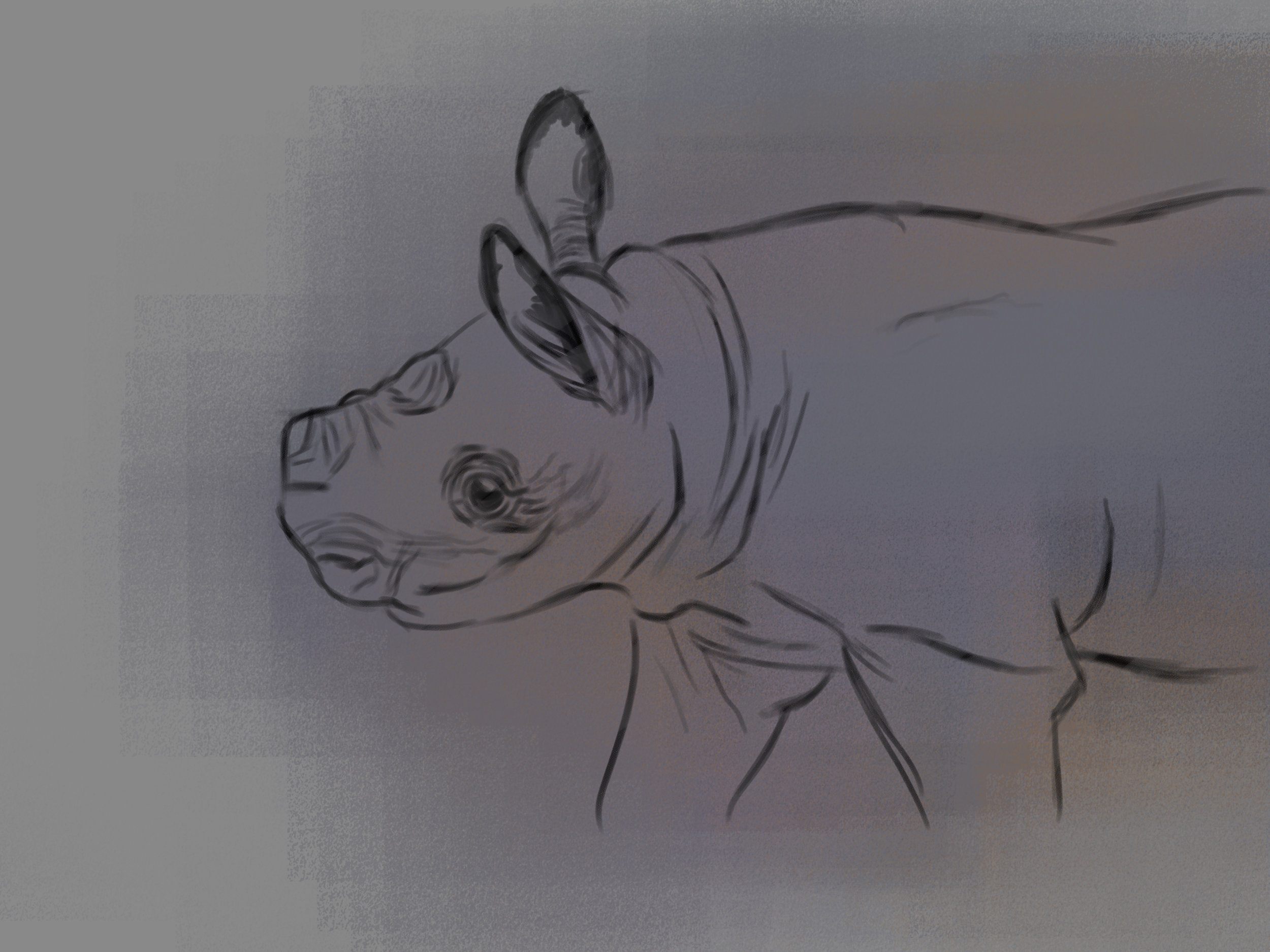 rhino life sketches 2.jpg