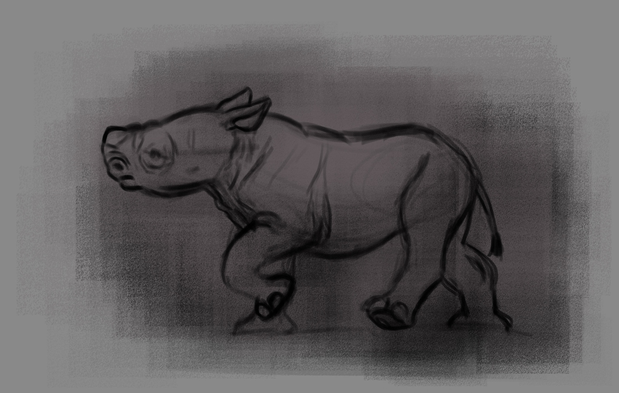 rhino+life+sketches.jpg
