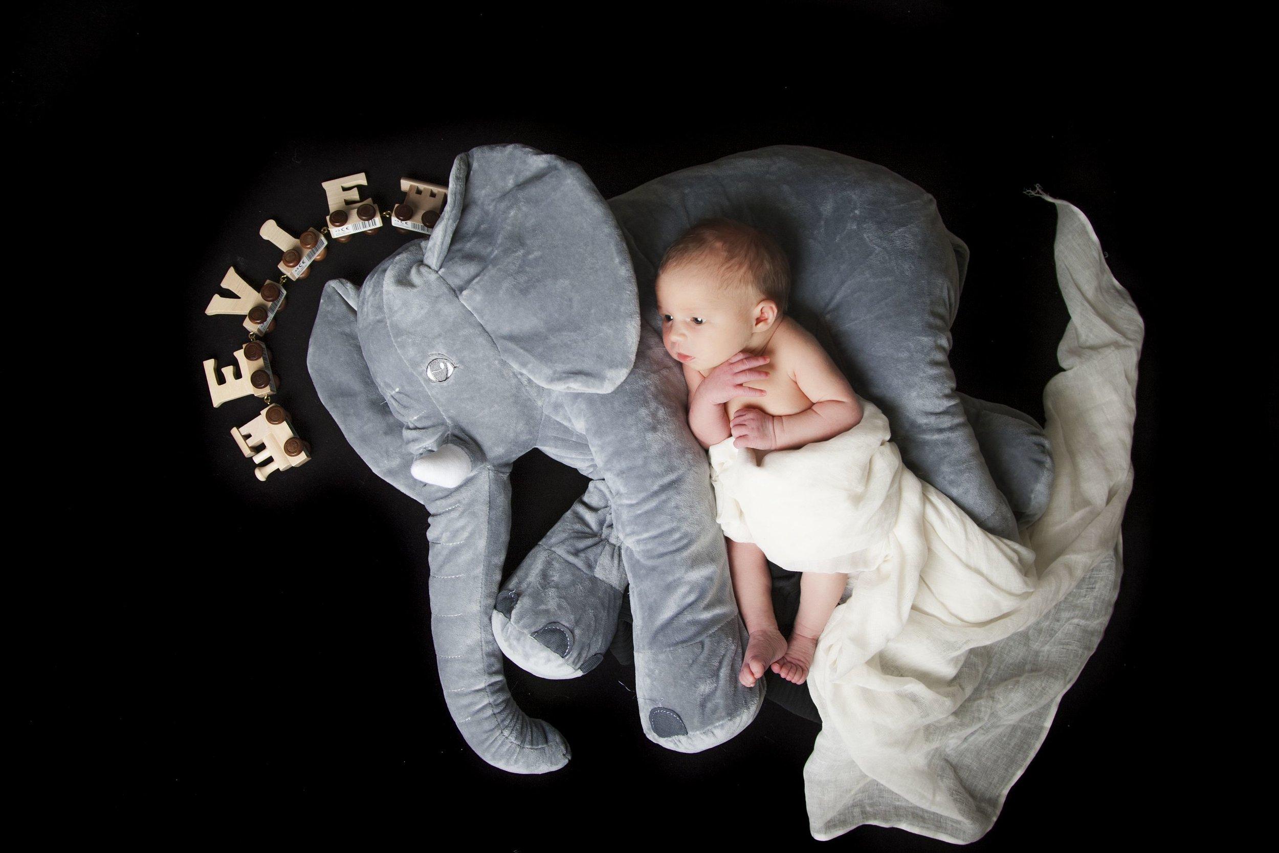 newborn-photographer-leicester-baby-photography-shoot-photo-props-elephant-ideas-props-zigzag-zig-zag.JPG
