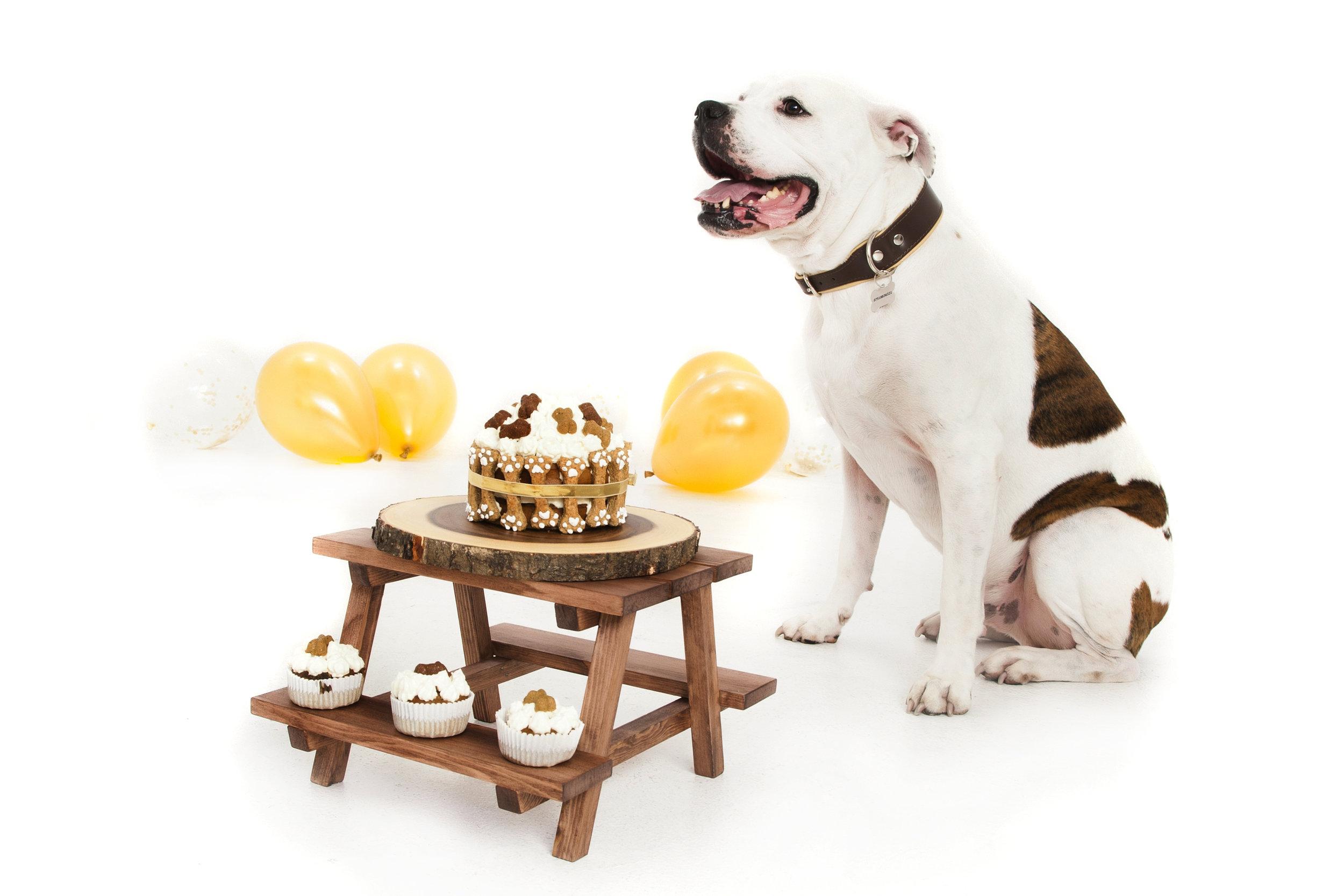 pet-portraits-dog-cake-smash-animal-photography-zigzag-zig-zag-photographers.JPG