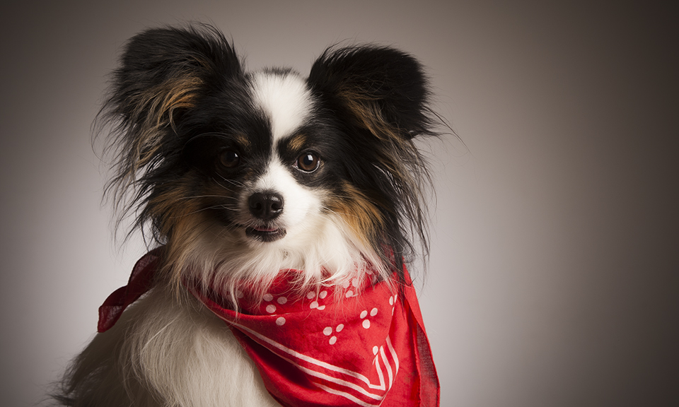 zigzag-zig-zag-photography-leicester-venture-studios-dog-pets-photographer-photoshoot.jpg
