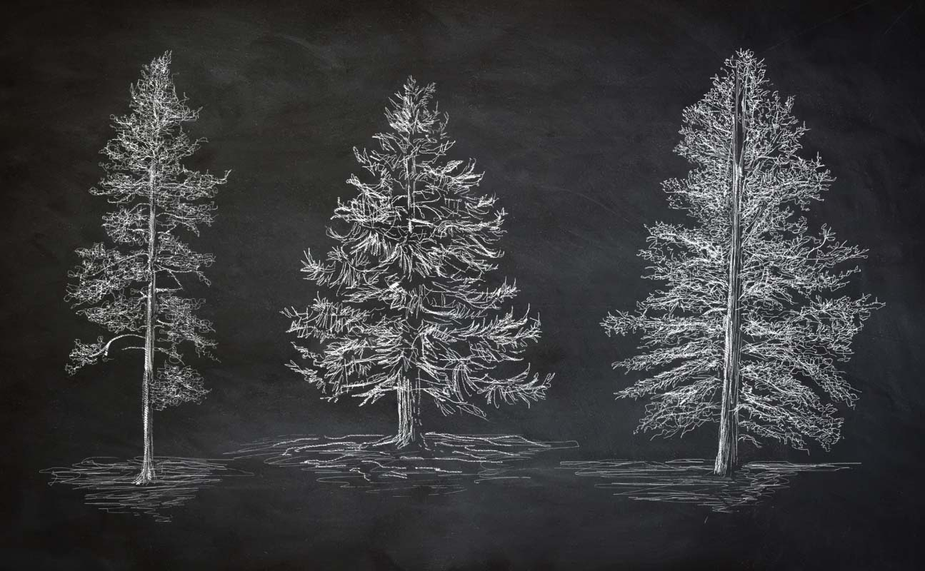 OSU_chalk_trees.jpg