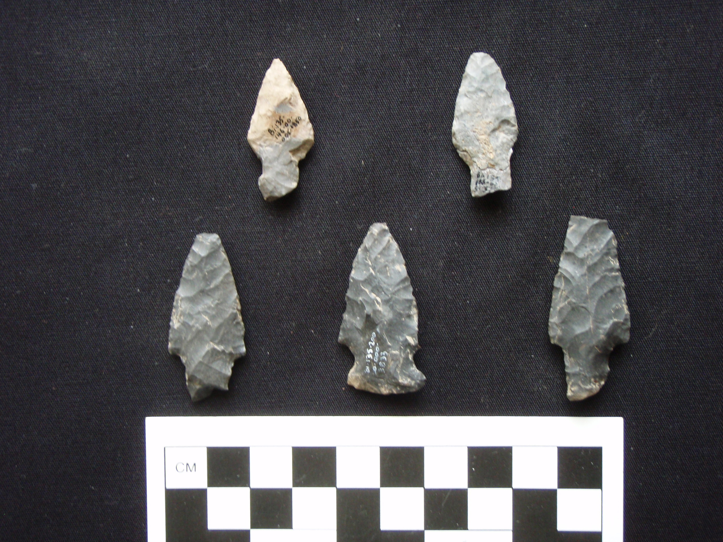 Lamoka Stemmed and side-notched points from a site in Central New York.  Photo Credit: Ed Curtin